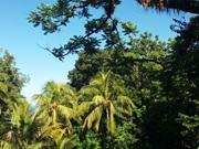 Vign_vue_arbre